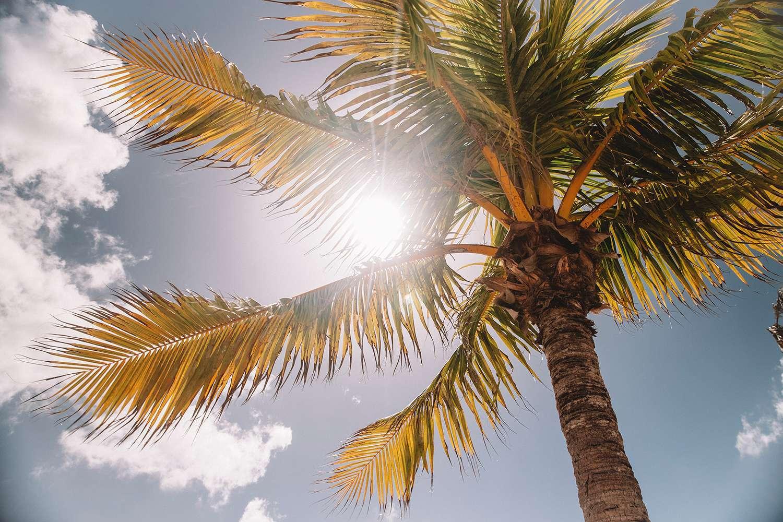曬太陽有最佳時機